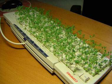 cress growing out of keyboard