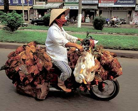 lots and lots of chickens on a moped