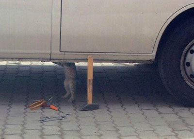 cat fixing a car